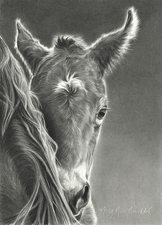 Wet Behind the Ears by Mary Ross Buchholz, Graphite & Charcoal, 13 x 9 Baby Animal Drawings, Horse Drawings, Animal Sketches, Horse Pencil Drawing, Pencil Drawings, Charcoal Drawings, Drawing Art, Illustrations, Illustration Art