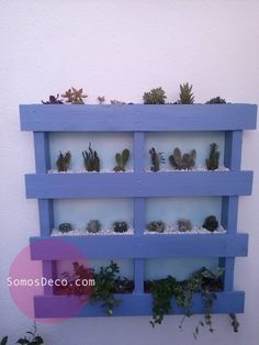 mini garden in a reused pallet- perfect to hang in small areas Indoor Cactus Plants, Cool Plants, Outdoor Plants, Outdoor Gardens, Mini Cactus Garden, Lawn And Garden, Oscar Niemeyer, Southwest Decor, Outside Living