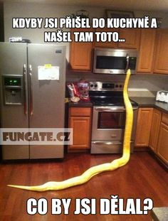 Funny pictures about Kitchen Snake. Oh, and cool pics about Kitchen Snake. Also, Kitchen Snake photos. Funny Animal Memes, Funny Animal Pictures, Funny Animals, Funny Memes, Animal Funnies, Funniest Pictures, Hilarious Quotes, Animal Jokes, All Animals Pictures