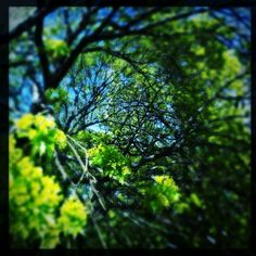 iPhone photo: Spring   by Kate England