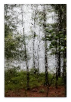 nature photography, lake house, cabin decor, thunderstorm, pine trees, summer, minimalist - thunderstorm, 8x12 photograph