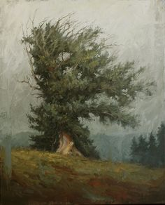 """Terry Gardner, """"The Arms of the Bristlecone"""" Oil on Canvas 36""""x 28"""""""