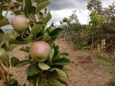 manzano ecologico