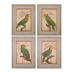 &&  Parrot And Palm I, II, III, IV - Fine Art Giclee Under Glass