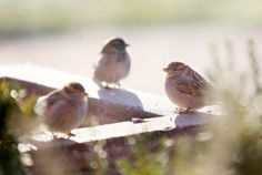 Christmastime opportunities to count birds in Siouxland