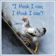 Hen, 2015 - by Murat Saygıner Czech/Turkish Chicken Quotes, Funny Cute, Hilarious, Raising Chickens, Chickens Backyard, Be Yourself Quotes, Bible Quotes, Funny Photos, Poultry