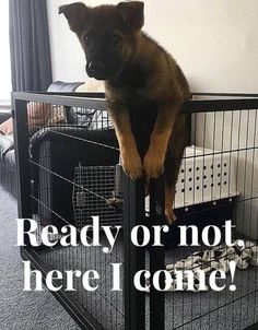 Got a little escape artist? Check out these recommendations for secure crating solutions! https://www.animalhub.com/escape-proof-dog-crate/ #dogs #doglovers #puppies