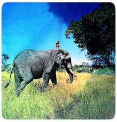 Africa's modern day Mowgli – Tippi Degre