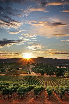 Napa Valley Sunset (or sunrise?) #sunset #California