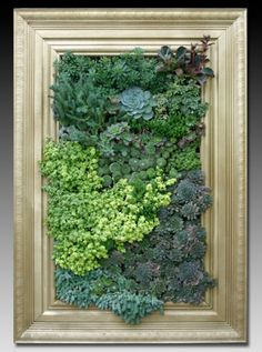 Picture Frame Plant Container