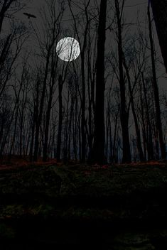 Moon Photograph - Haunted Moon by Emily Stauring