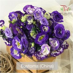 As Eustoma symbolise contentment, peace, and love for other people ••给朋友送洋桔梗代表着着双方有深厚的感情,给爱人送洋桔梗的话则是代表真诚的,永远不变的爱! Modern Meaning, Symbols, Vegetables, Icons, Vegetable Recipes