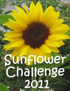 sunflower challenge 2
