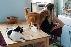 photo My-photo-series-of-Girls-and-Their-Cats-on-Instagram.__700_zpssbxkpb4d.jpg