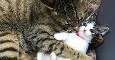 These Tabby Cats Decided To Raise Two Orphan Kitties As Their Own – You Just Have To See The Pics