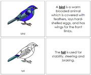 Bird Nomenclature Book