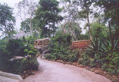 Singapore Zoological Gardens Great Rift Vally Hamadryas Baboon Exhibit