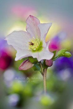 ~~Spring Awakening by Jacky Parker~~