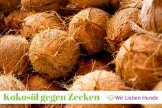 Zeckenschutz für Hunde ✓ Kokosöl gegen Zecken ✓ natürlicher Schutz ✓ Anwendung und Tipps ✓ Auf Wir lieben Hunde!