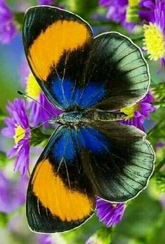 Different Types of Butterflies Butterfly Painting, Butterfly Wallpaper, Butterfly Flowers, Butterfly Wings, Most Beautiful Butterfly, Beautiful Bugs, Amazing Nature, Types Of Butterflies, Flying Flowers