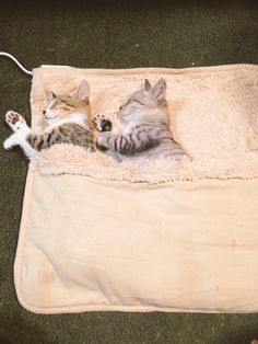 >>wow! heated beds for cats!