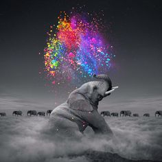 True Colors Within | søaring anchør designs  #elephant #colorswithin #truecolors #rainbow #digitalart #photomanipulation #wallart #wildlife #saveelephants
