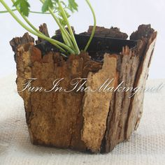Small Bark Covered Pot... exactly what I was looking for to hide those giant plastic pots I have the tomatoes planted in.
