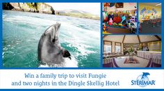 Win a family trip to visit Fungie, plus two nights at the Dingle Skellig Hotel - Competitions. Family Travel, Competition, Ireland, Night, Places, Animals, Family Trips, Animales, Animaux