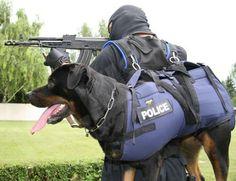 16600-XL Harnais spécial hélitreuillage JULIUS-K9 pour porter le chien - tailles: LARGE - Tour de Poitrail: 100 à 140 cm - Poids du chien: 30 à 60 Kg: Amazon.fr: Animalerie
