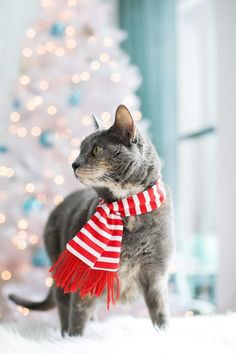 Adorable kitty in red and white scarf. Blue and white holiday decor.