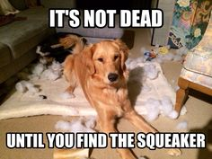 It's not dead until you find the squeaker. All dogs know this!!