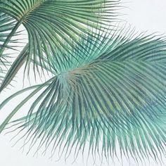 🌴🌴🌴 #palms #book #taschen