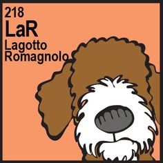 Lagotto Romagnolo |Pinned from PinTo for iPad|