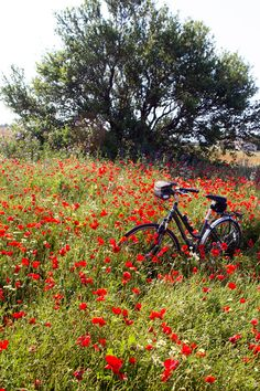 bicycle in poppy field - La Tartine Gourmande Beautiful Nature Wallpaper, Beautiful Landscapes, Photography Workshops, Nature Photography, Landscape Photos, Landscape Paintings, Cycling Holiday, Poppies Tattoo, Red Poppies