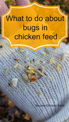Bugs in the chicken feed: