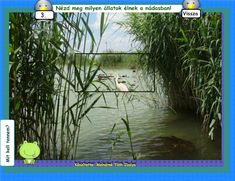 Fotó itt: A vízpart élővilága 3-4. osztályos interaktív tananyag - Google Fotók Aquarium, Google, This Or That Questions, Animals, Goldfish Bowl, Animales, Animaux, Aquarium Fish Tank, Animal