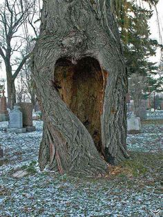 Heart-shaped tree hollow in the Cimetière Notre-Dame-des-Neiges, Montréal, Québec, Canada