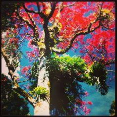 #oreillysrainforestretreat #lamingtonnationalpark #colourlove #nature #warmweather #outdoors