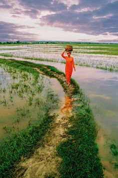 Rice Fields of Vietnam Village Photography, Nature Photography, Travel Photography, Laos, Vietnam Travel, Asia Travel, Good Morning Vietnam, Cool Photos, Beautiful Pictures