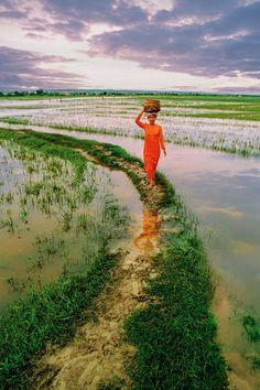 The Way - Rice Fields of Vietnam