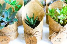 Image result for decorating with succulents baby shower