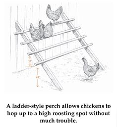 Ladder style chicken perch