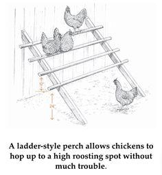 Ladder style chicken perch