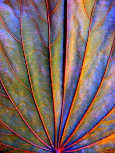 Texture and pattern: Dry Leaf by Arina Jansen van Vuuren