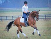 Top FEI Young Horse Prospect! 2009 KWPN gelding by Harmony's Rousseau who will put his new rider and himself on the map! Ambitious young horse with balance and the talent to do it all! $58,000