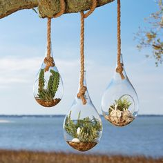 Hanging Terrarium, Faux Fern | Attached to a knotted rope, this teardrop glass vase houses a petite faux fern. Suspend it over your decor for a touch of nature-inspired whimsy.