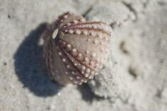 Sea urchin macro
