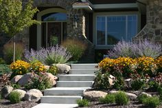colorful flowers for front yard landscaping