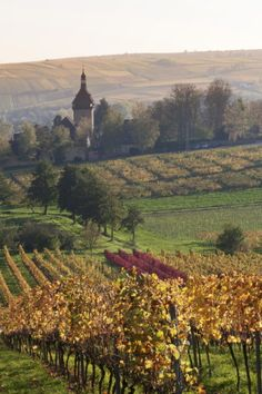 Vineyards in Autumn, German Wine Route, Pfalz, Rhineland-Palatinate, Germany, Europe Photographic Print by Marcus Lange at AllPosters.com