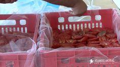 Αποξηραμένες ντομάτες στον ήλιο Stuffed Peppers, Food, Kitchen, Youtube, Cooking, Stuffed Pepper, Essen, Kitchens, Meals